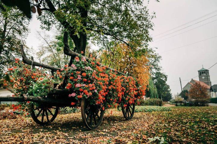 Jesień Stare Siołkowice zdjęcia 2018
