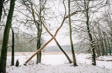 Gęsi Staw Stare Siołkowice zima