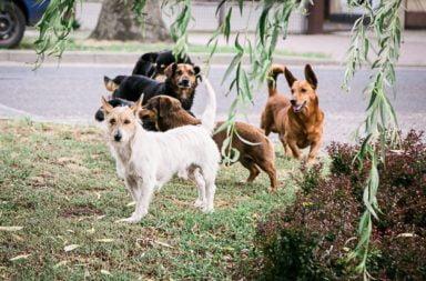 Psi problem - kto się z nim upora